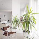 Shining apartment in Genoa