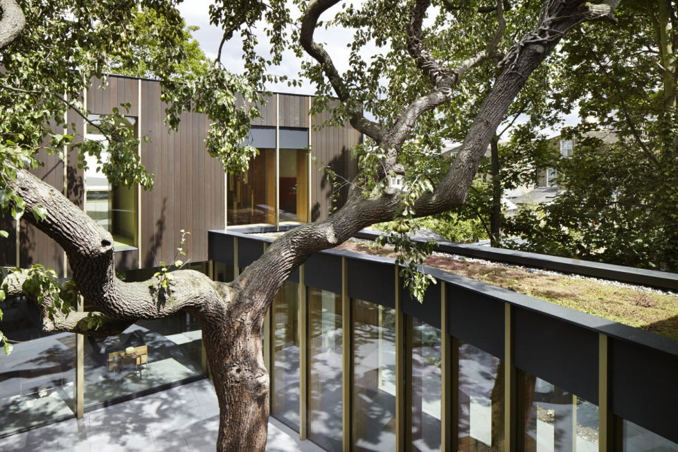 Pear Tree House The Around The Tree Residence in London by Edgley Design14